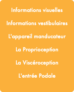 Informations visuelles Informations vestibulaires L'appareil manducateur La Proprioception La Viscéroception L'entrée Podale